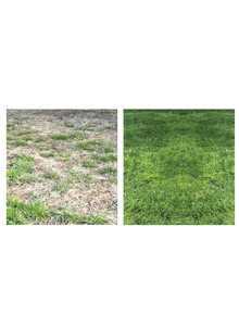 Cutting Edge Grass Seed&#174
